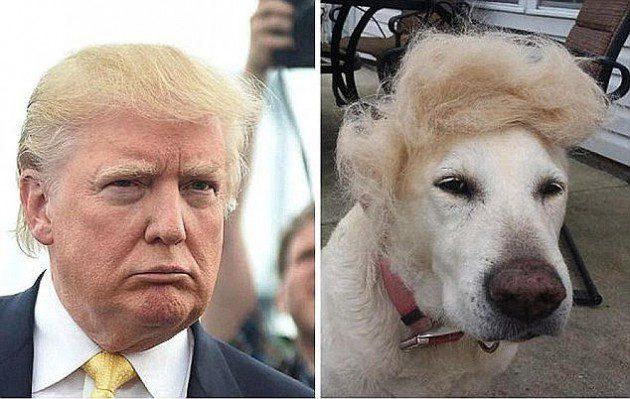نشطاء يشبهون الرئيس الأمريكي دونالد ترامب بالحيوان
