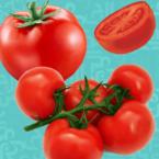 الطماطم - البندورة وفوائدها