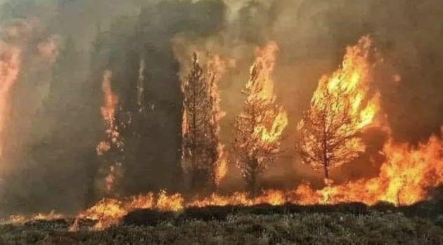 فيديو مؤثر عن حرائق لبنان وكيف أنقذته العناية الإلهية - فيديو