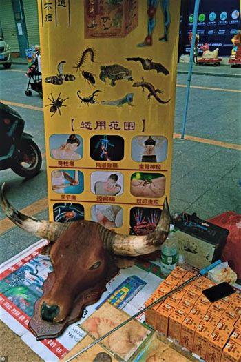 الصين فتحت سوقها لبيع الحيوانات مجددا